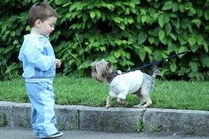 child dog